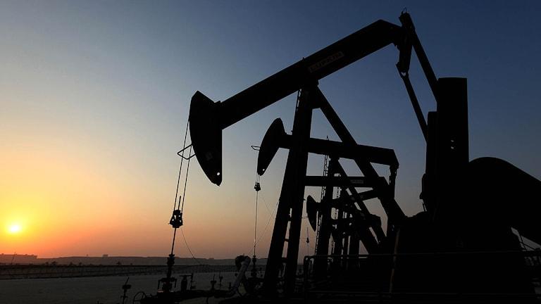 Flera oljepumpar på ett fält. Foto: Hasan Jamali/TT.