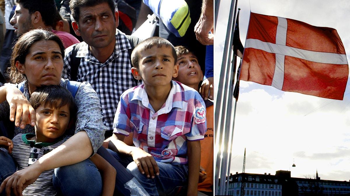 Flyktingar. Dansk flagga. Foto: Boris Grdanoski/John McConnico. TT