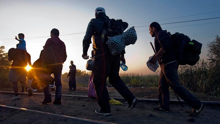 Migranter på väg över från Serbien till Ungern.