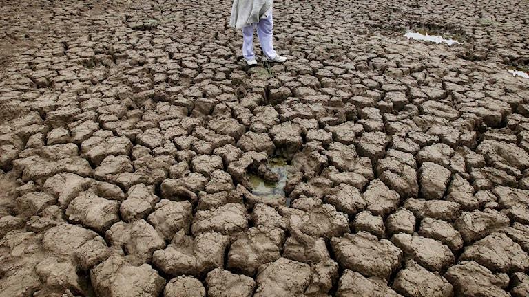 Kraftig torka i Indien 2012.