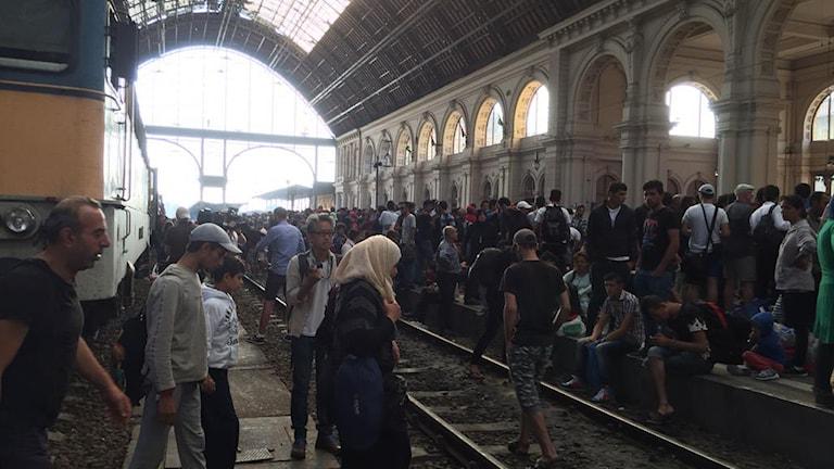Flyktingar rusar mot tågen i Budapest. Ännu inga tåg som rullar västerut Foto:Daniela Marquardt/ Sveriges Radio