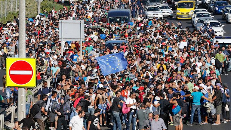 Ett tusental flyktingar lämnar Budapest, Ungern just nu. Foto: AP Photo/Frank Augstein/TT.