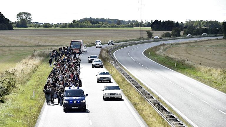 En grupp flyktingar som anlände till Rødby i Danmark var på väg till fots mot Sverige, de har nu återvänt. Foto: Bax Lindhardt/TT