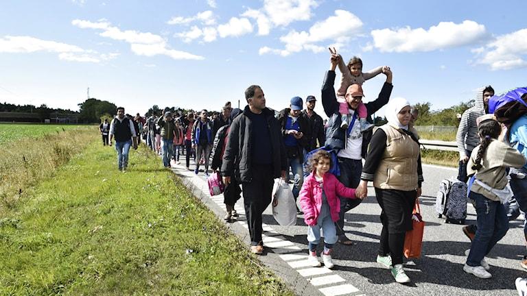 En grupp flyktingar på väg till fots mot Sverige genom Danmark. Foto: Bax Lindhardt/TT