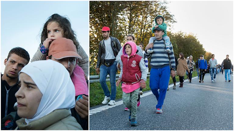 En grupp flyktingar som anlände till Rødby i Danmark var på väg till fots mot Sverige, de har nu återvänt. Foto: TT