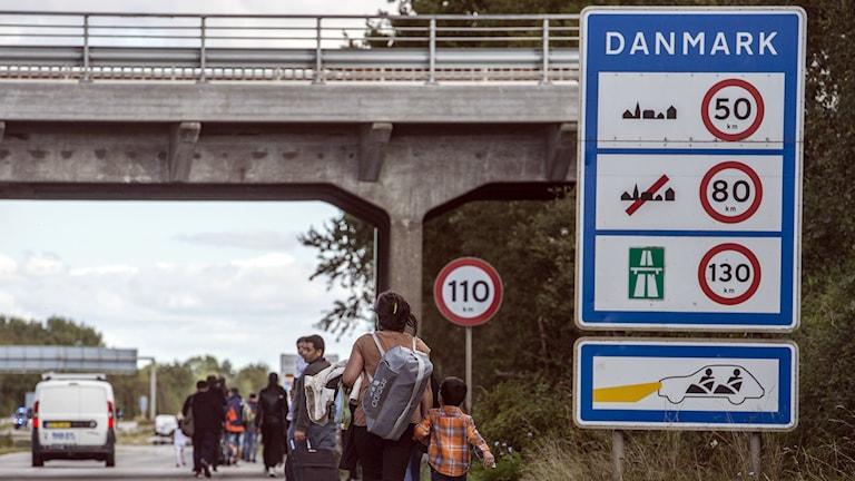 Flyktingar, som kommit till Danmark med färja från Tyskland, går längs en motorväg vid Rödby i södra Danmark. Foto: TT.