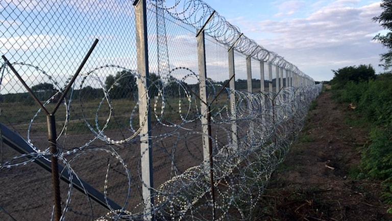 Stängsel längs Ungerns gräns.