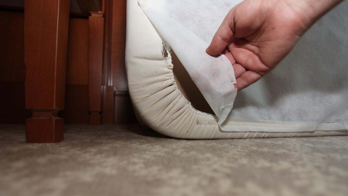 Spillning av vägglös på säng. Foto: David Mora/ Anticimex.