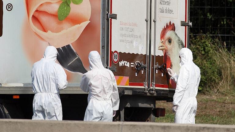71 flyktingar hittades döda i en lastbil utanför Wien den 27 augusti. Foto: Ronald Zak/AP.