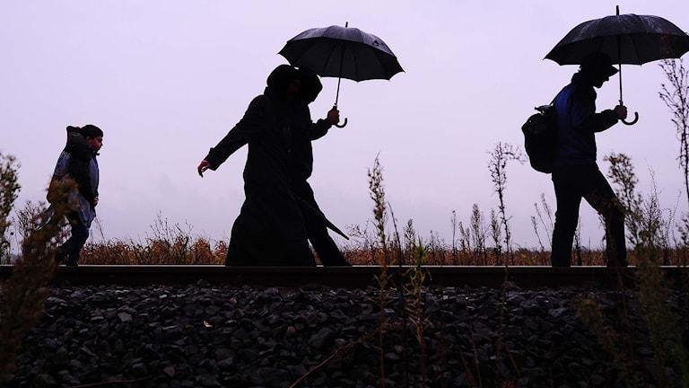 Flyktingar går längs järnvägsspår vid den serbisk-ungerska gränsen. Foto: Attila Kisbenedek/TT.