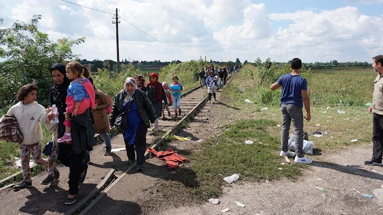 Tusentals flyktingar följer den gamla rälsen - på väg mot det okända. Foto: Stanko Popovic/Sveriges Radio.