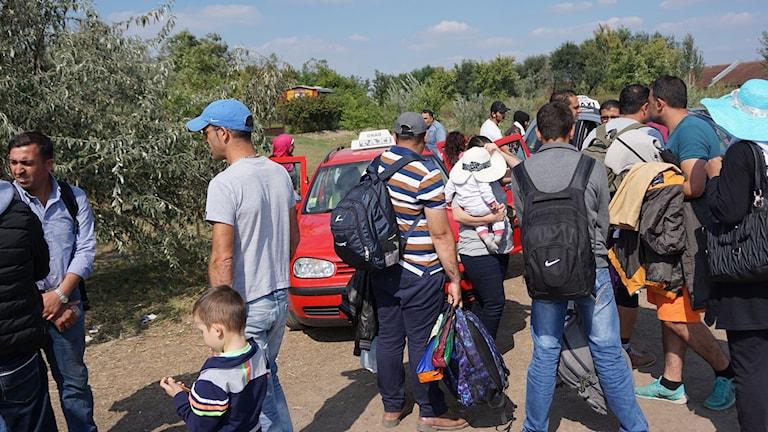 Flyktingar på gränsen mellan Serbien och Ungern. Foto: Stanko Popovic/Sveriges Radio.