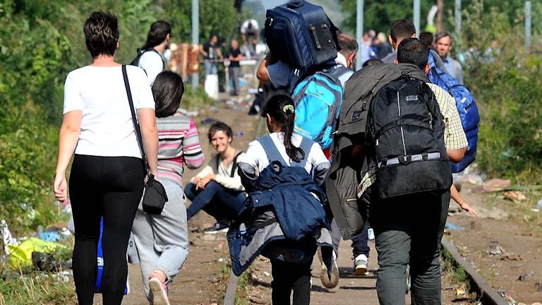 Flyktingar går längs järnvägsspår. Foto: Elvis Barukcic/TT.
