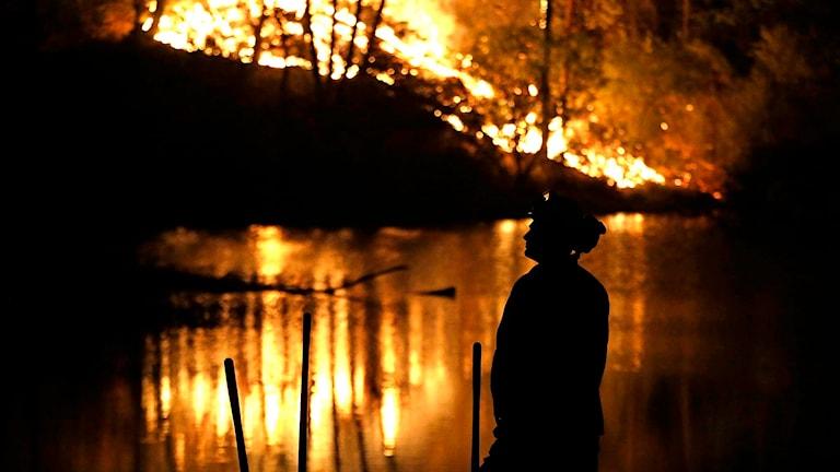 En brandman står när en skogsbrand i Kalifornien. Foto: Elaine Thompson/TT.