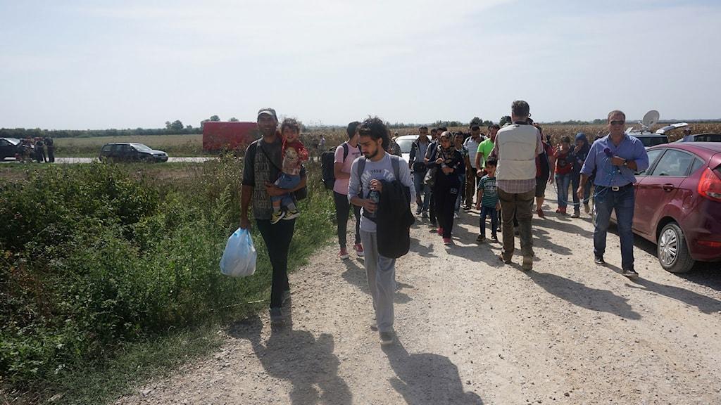 Flyktingar på väg mot kroatiska gränsen. Foto: Milan Djelevic/Sveriges Radio.