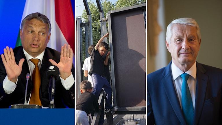 Orban Jagland Stängsel Ungern