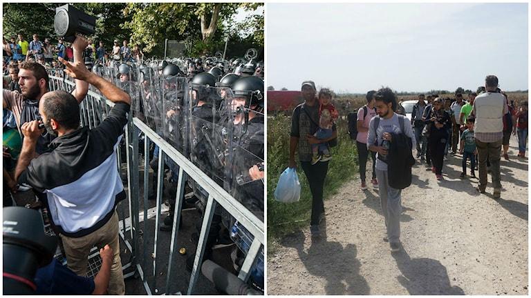 Efter att Ungern stängde gränsen mot Serbien började många ta sig till Kroatien istället. Foto: TT och Stanko Popovic.