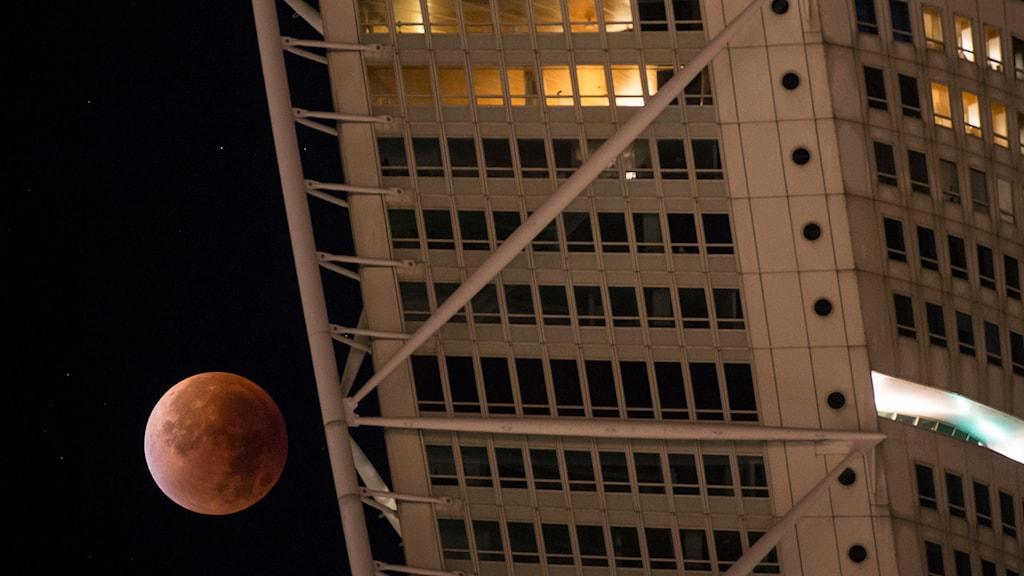 Superblodmånen svävar över det 190 meter höga bostadshuset Turning Torso i Malmö. Foto: Johan Nilsson/TT.