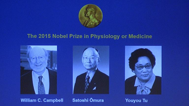 Nobelprisvinnarna i medicin 2015. Foto: Jonathan Nackstrand/AFP.