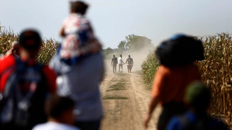Migranter går på en väg mellan Serbien och Kroatien. Foto: Matthias Schrader/TT.