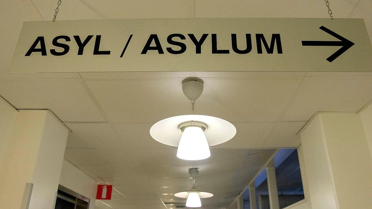 Skylt på Migrationsverket som visar vart asylsökande ska gå. Foto: Maja Suslin /TT.