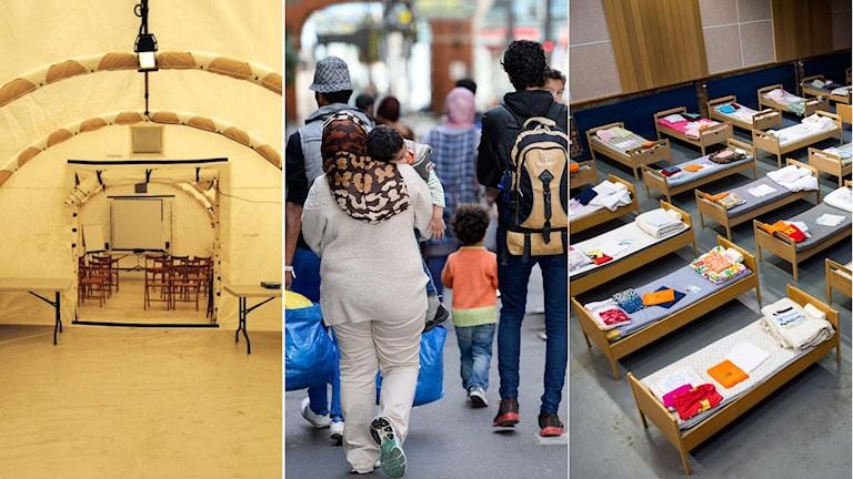 Insidan av en tältmodell som redan finns. Flyktingfamilj med barn. Sovsal i Sundbyberg som är redo att ta emot flyktingar. Foto: Regeringen. TT. Montage: Sveriges Radio.