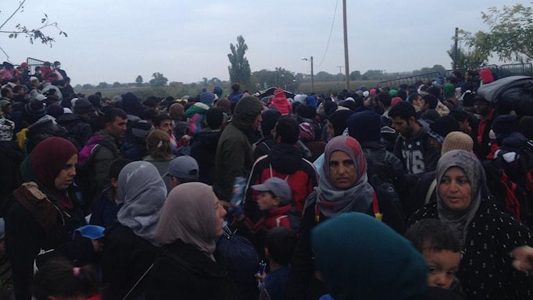 Flera hundra personer väntar i Berkasovo på att få komma in över gränsen till Kroatien. Foto: Stephanie Zakrisson/Sveriges Radio