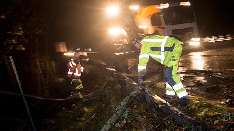 Vägarbetare tar hand om nedfallet träd på väg i Skåne. Foto: Johan Nilsson/TT