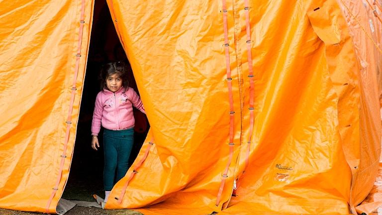 Flyktingar vid den norska gränsen Storskog.  Foto: Tore Meek