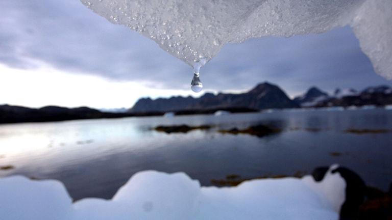 Isberg som smälter.