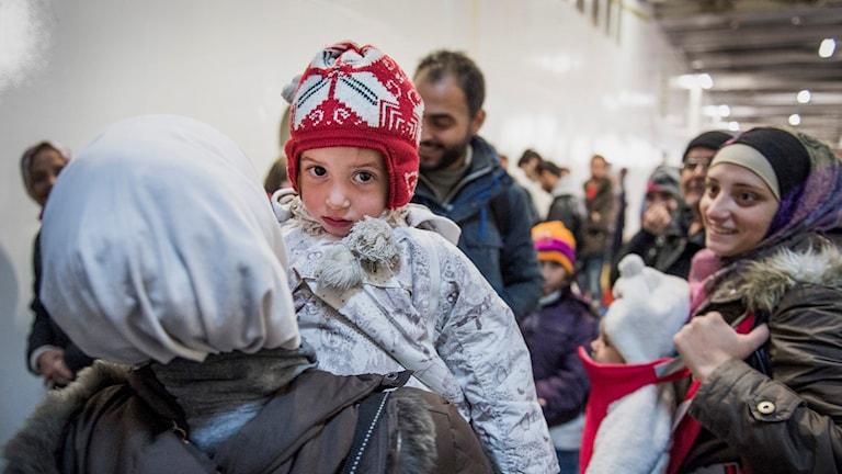 Flyktingar som anländer till Sverige. Foto: Marcus Ericsson/TT