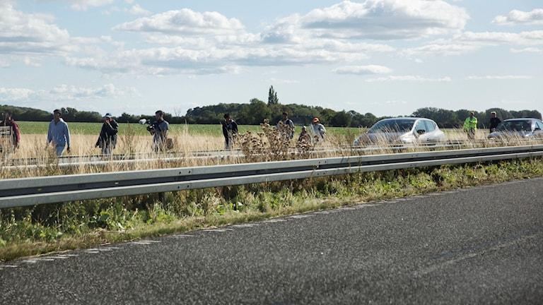 Flyktingar på motorväg i Danmark. Foto: Ola Torkelsson/TT