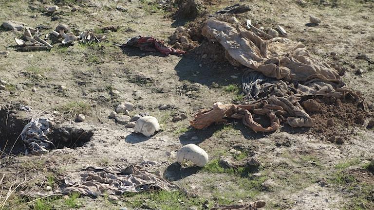 Ännu en massgrav har hittats i Sinjar. Foto: Katja Magnusson/Sveriges Radio