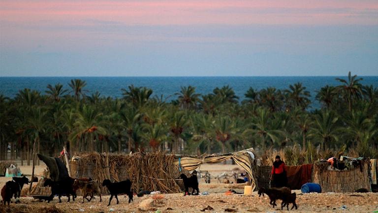 Bilden är en genrebild och illustrerar norra Sinai.