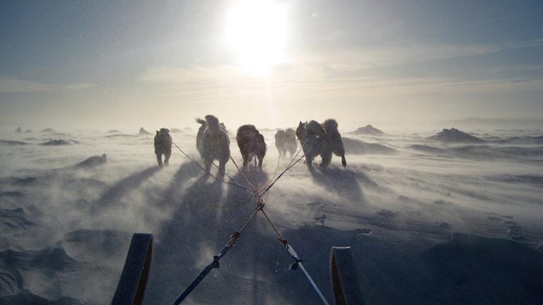 Inuiter i Kanadas Arktis