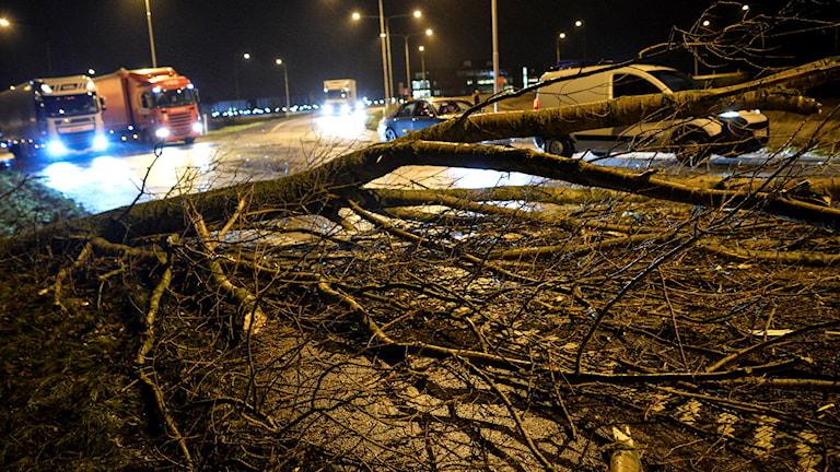 Nedfallet träd över väg. Foto: Johan Nilsson/TT
