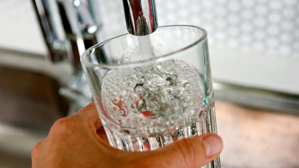 Vatten hälls upp i ett glas från vattenkran. Foto: Christine Olsson/TT.