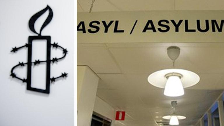 Svenska Amnesty är kritisk mot regeringens tuffare asylförslag Foto: Tomas Oneborg/ TT