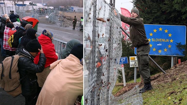 T.v. fyktingar som köar vid gränsen och t.h. en man som lutar sig mot ett staket och en skylt där det står Slovenija. Foto: Ronald Zak/AP