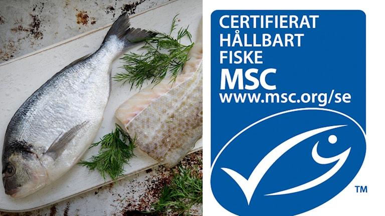 Östersjötorsken är inte längre msc-märkt. Foto: TT samt MSC.