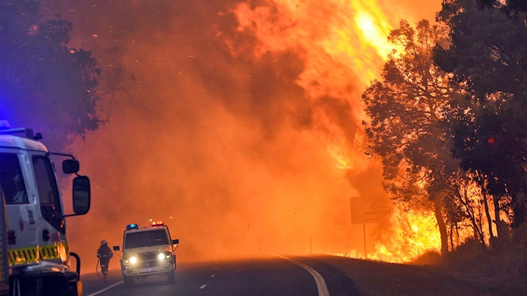 Brandmän kämpar mot massiva bränder i Perth, Australien. Foto: AFP