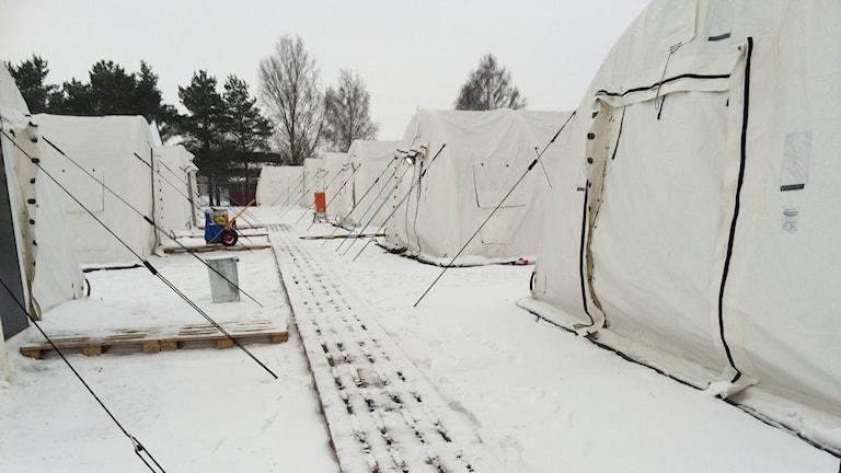 Lägret består av 20 sovtält. Foto: Anna Bubenko/Sveriges Radio