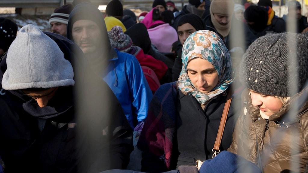 Flyktingar vid Sloveniens gräns mot Österrike. Foto: Darko Bandic/TT.