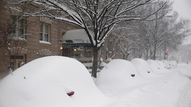 Insnöade bilar i Washington. Foto: Alex Brandon/AP/TT