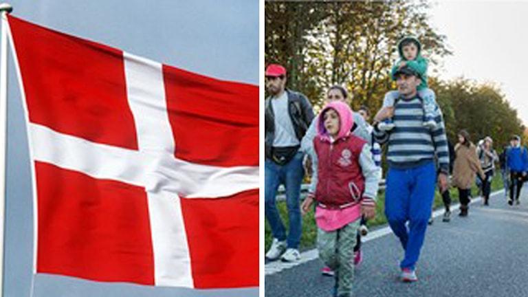 Nya asyllagar i blåsväder i Danmark Foto: TT