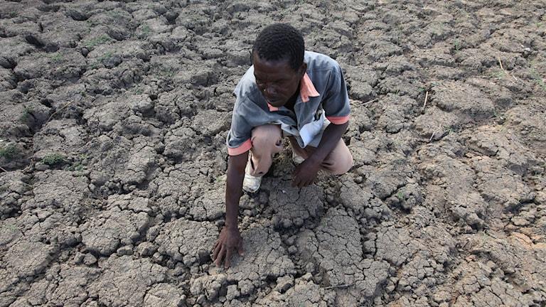I Chivi, Zimbabwe känner Last Zimaniwa på marken där vatten annars är en tillförlitlig källa. Nu har den torkat ut. Foto: AP