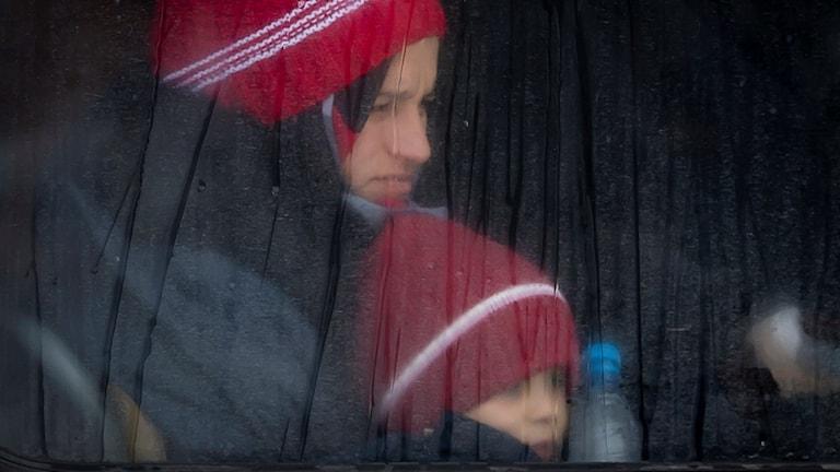 Flyktingar anländer till Slovenien. Foto: Darko Bandic/TT.