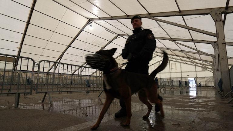 En polis med hund i ett tomt registreringstält för asylsökande vid den slovenska gränsen.
