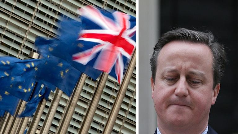 Strobritanniens flagga och EU-flaggor fladdrar i vinden. Storbritanniens premiärminister David Cameron.
