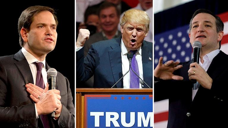 Marco Rubio, Donald Trump, Ted Cruz. Foto: Jae C. Hong/John Locher/Marcio Jose Sanchez/TT.